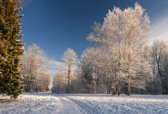 Path to winter forest Royalty Free Stock Photos