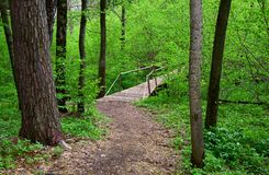 Path to the wooden bridge in the Park in spring royalty free stock images