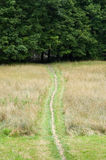 Path to the Woods. A path leads through a meadow to the woods Royalty Free Stock Image