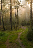 Path towards the light. Misty morning in a forest,sunbeams falling through the trees Stock Photography