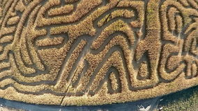 Path trails in a corn field form a maze stock footage