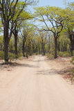 The path less travelled. A dirt road through a forest, Africa Royalty Free Stock Photos