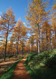 Path tree Stock Photo