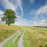 Path with Tree Royalty Free Stock Photography
