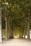 A path in a tree avenue. A path in a long tree avenue in late summer stock images
