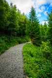 Path tree in the forest on the border Stock Images