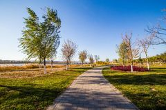 Path with tree and grass Royalty Free Stock Photo