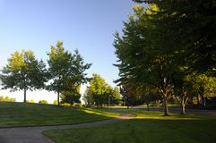 Path through tree lined park Royalty Free Stock Image