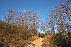 Path through the tree Stock Image