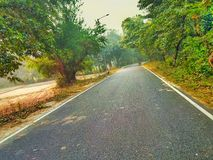 A path and trees along with both side of road. A road and trees along with both side of road stock image