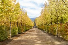 Path with trees and benches in the Granja in Segovia, Spain. Path with trees and benches in the Jardin de la Granja in Segovia, Spain Stock Image