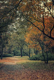 Path between trees and bushes with orange leaves in autumn park. Royalty Free Stock Image