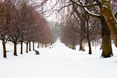 A path between trees covered in deep snow Stock Photography