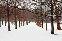 A path between trees covered in  snow Stock Image