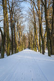 A path between trees covered with snow Royalty Free Stock Photo