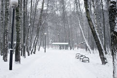 Path between trees covered with snow Stock Photography