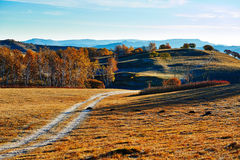The path and trees on fall meadows sunrise Royalty Free Stock Image