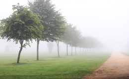 Path with trees in a fog. Path in a field or park with row or trees in morning fog or mist Royalty Free Stock Images