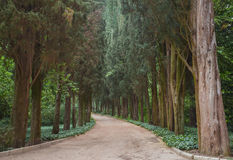 Path through trees in the forest Stock Photography
