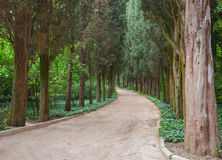 Path through trees in the forest Royalty Free Stock Image