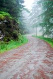A Path between trees in Glendalough Ireland royalty free stock image