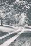 A path with trees Royalty Free Stock Photography