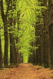 Path with trees with green spring leaves royalty free stock image