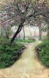 Path Through Trees on Grunge Background Royalty Free Stock Image