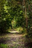 Path Through Trees. Hiking path with beautiful trees and sunlight royalty free stock photo