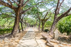 Path with trees. In Legenda Park, Kuah royalty free stock image