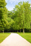 Path between trees and meadows Royalty Free Stock Image