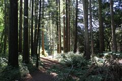 Path Through Trees. Outdoors, No people stock photos