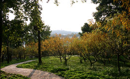 Path and trees in park. Scenic view of winding pathway in picturesque wooded park Stock Photography