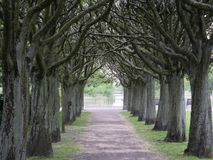 Path between trees in a park. Photography of a path between trees in a park. The photography has been taken in Malmo, Sweden in 2018 royalty free stock photography