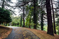 Path between trees. In arboretum Sochi,Russia royalty free stock image