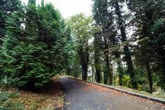Path between trees. In arboretum Sochi,Russia royalty free stock photo
