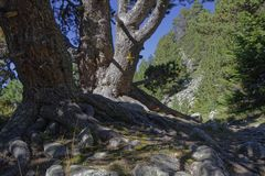 Path through the trees Stock Image