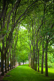 A Path Through the Trees Royalty Free Stock Photography