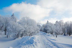 The path and trees with rime Stock Image