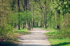 Path between trees in spring city park.  royalty free stock image