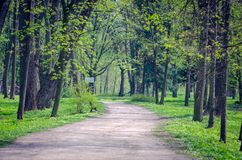 Path between trees in spring city park royalty free stock photography