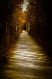 Path through the trees. Sunlit footpath through the trees in fall Stock Photo