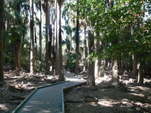 Path through trees. To the Mataranka Thermal Pool in the Northern Territory, Australia stock photography