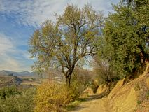Path with trees trough Sierre Nevada mountains under a blue sky with soft clouds. Andalusia, Spain Royalty Free Stock Photography