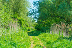 Path through trees in wetland in spring. In sunlight royalty free stock images