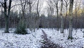 Path through trees in Whitwell wood. On a cold winters day Stock Photography