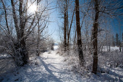 Path through trees in winter. Royalty Free Stock Photography