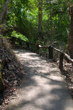 Path in tropical forest Stock Photography