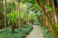 Path in a tropical garden Stock Image
