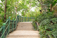 Path in tropical jungle Stock Photo